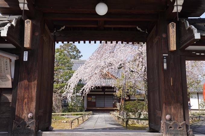 京都_桜_2020_04 No5