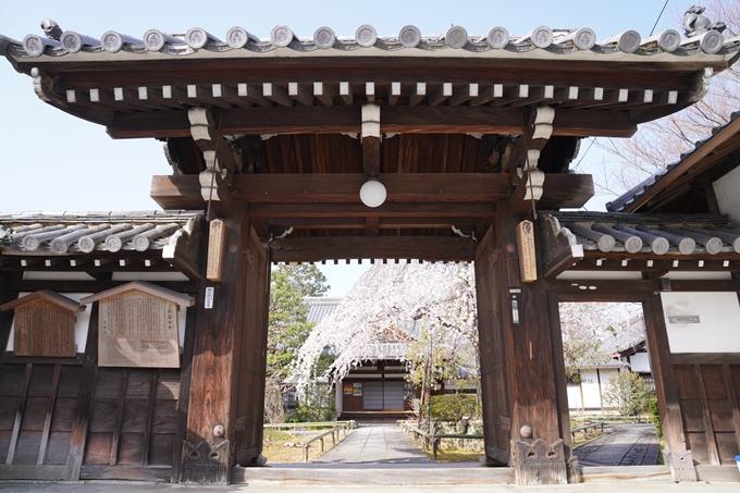京都_桜_2020_04 No4
