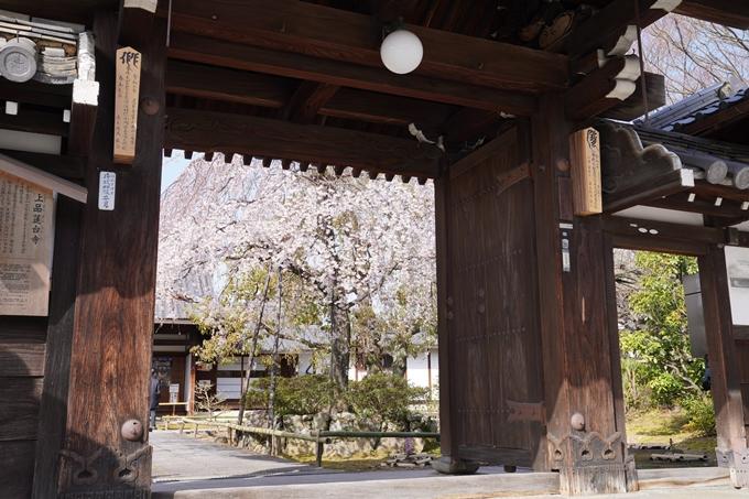 京都_桜_2020_04 No6