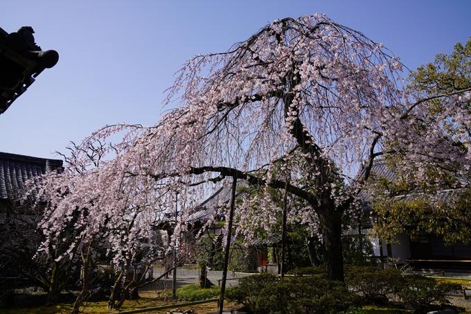 京都_桜_2020_04 No12