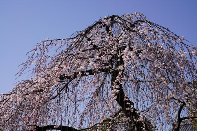 京都_桜_2020_04 No14