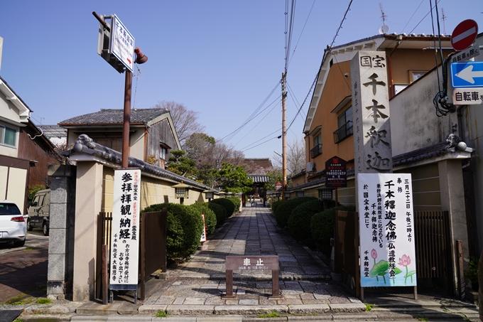 京都_桜_2020_05 No2