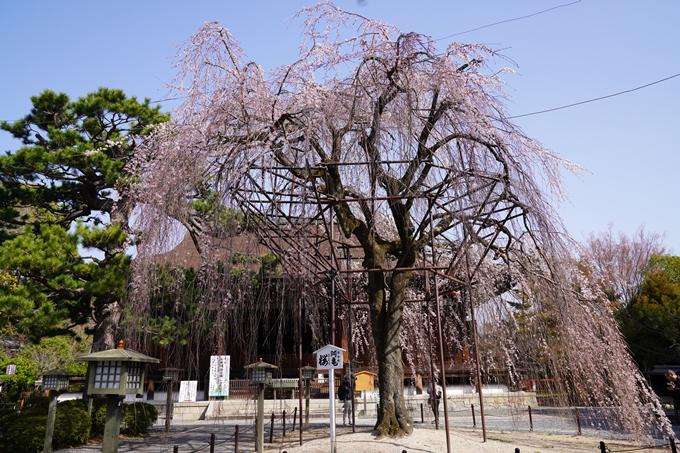 京都_桜_2020_05 No3