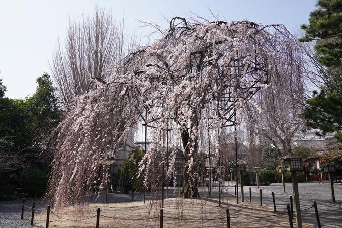 京都_桜_2020_05 No9