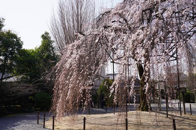 京都_桜_2020_05 No10
