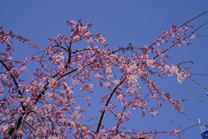 京都_桜_2020_06 No3