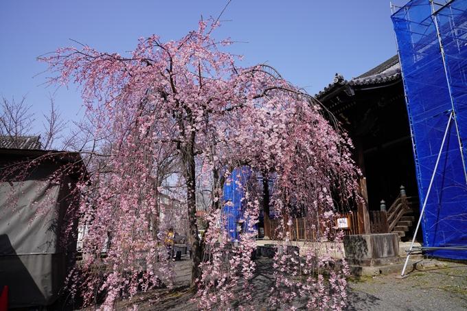 京都_桜_2020_06 No4