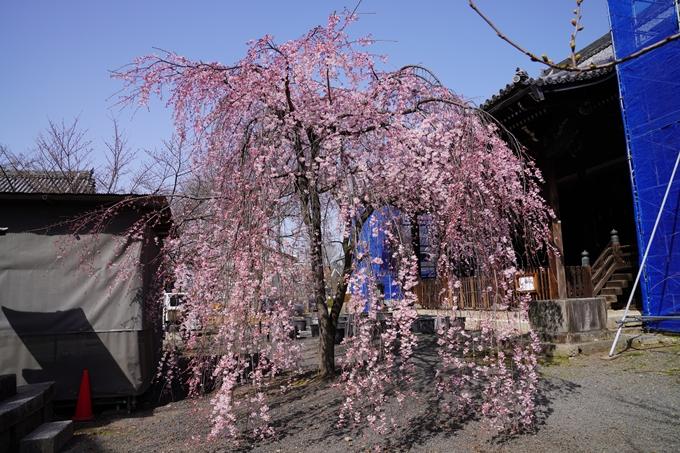 京都_桜_2020_06 No7