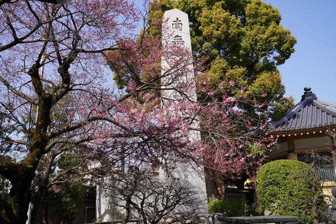 京都_桜_2020_06 No12