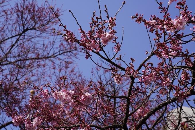 京都_桜_2020_06 No14