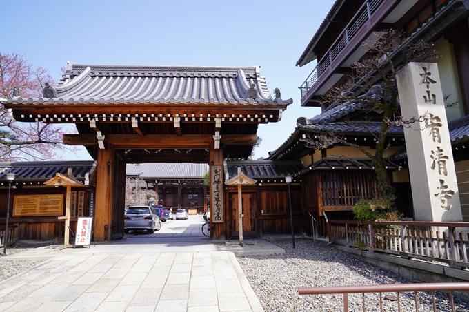 京都_桜_2020_06 No15
