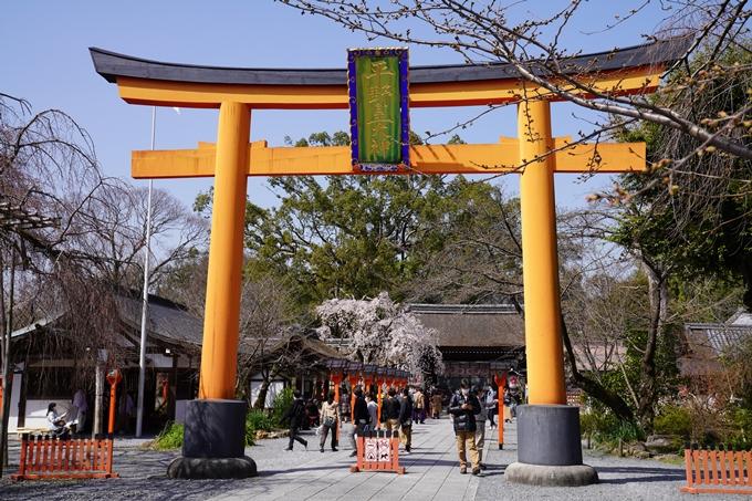 京都_桜_2020_07 No5