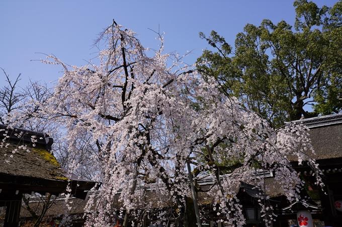 京都_桜_2020_07 No6