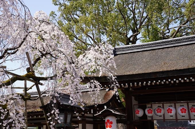 京都_桜_2020_07 No7