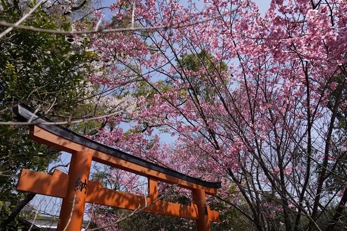京都_桜_2020_07 No13