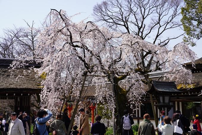 京都_桜_2020_07 No17