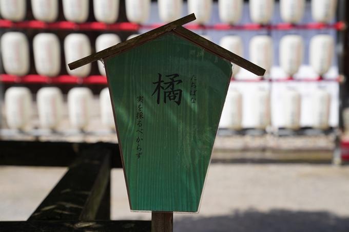 京都_桜_2020_07 No21