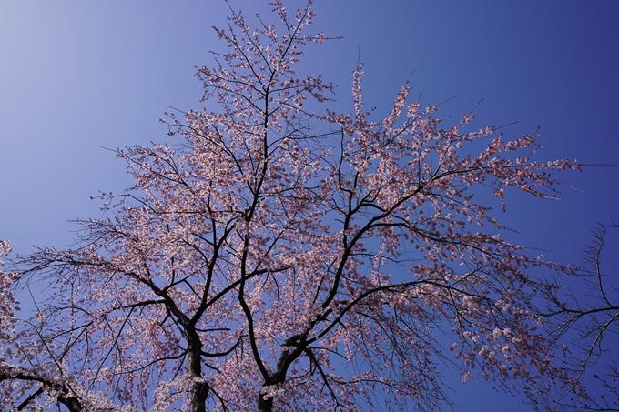 京都_桜_2020_07 No26