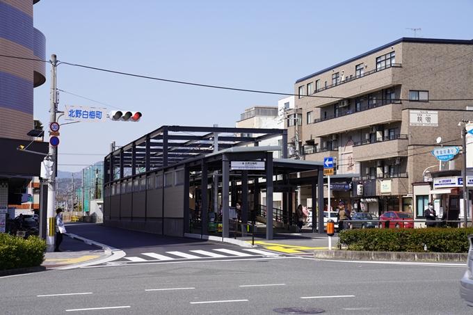 京都_桜_2020_07 No40