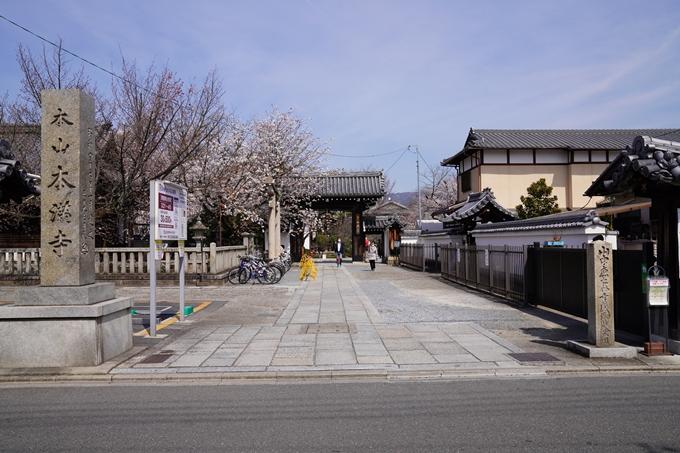 京都_桜_2020_13 本満寺 No2
