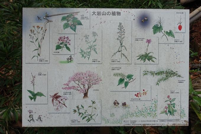 大岩神社 No48