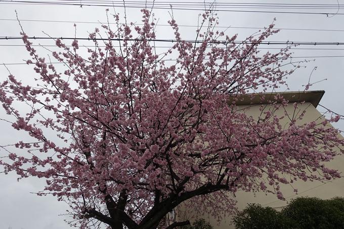 桜_2020_01 No2