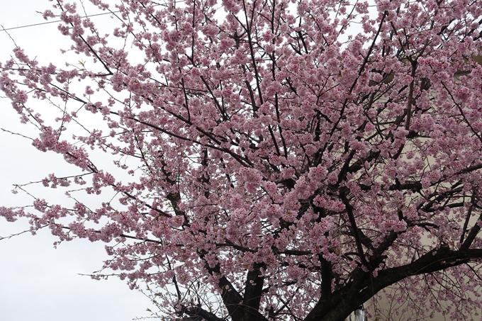 桜_2020_01 No3