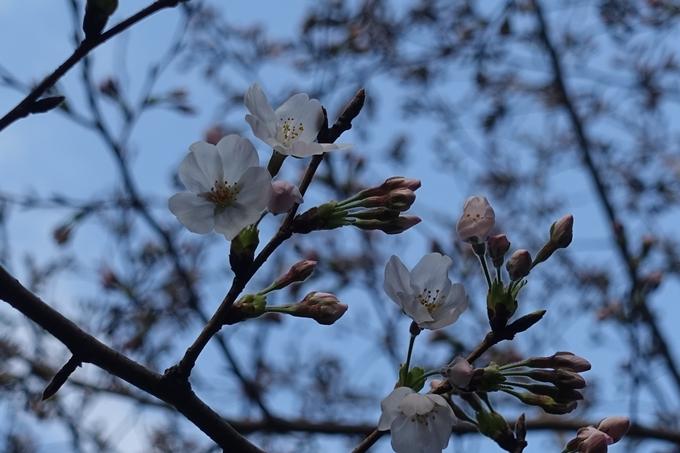 京都_桜_2020_09 No2