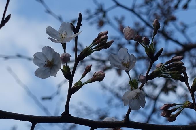 京都_桜_2020_09 No4