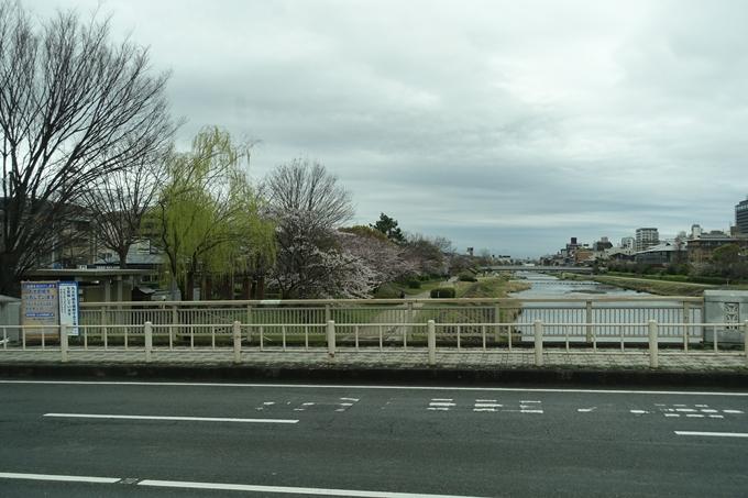 京都_桜_2020_10_鴨川 No2