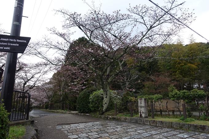 京都_桜_2020_12 哲学の道 No3
