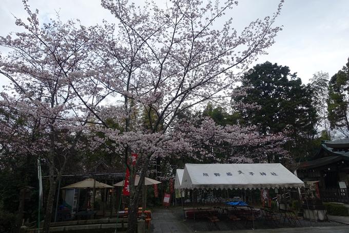京都_桜_2020_11 桜花苑 No5
