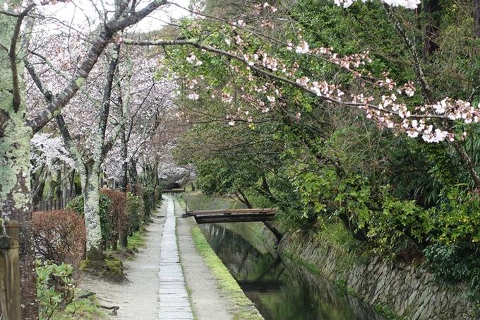 京都_桜_2020_12 哲学の道 No6