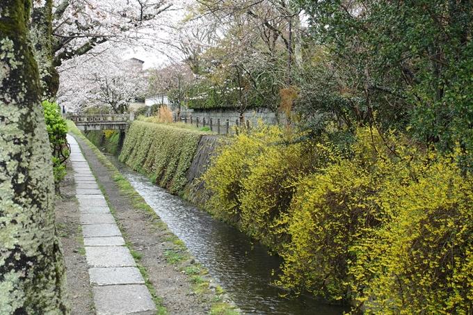 京都_桜_2020_12 哲学の道 No16