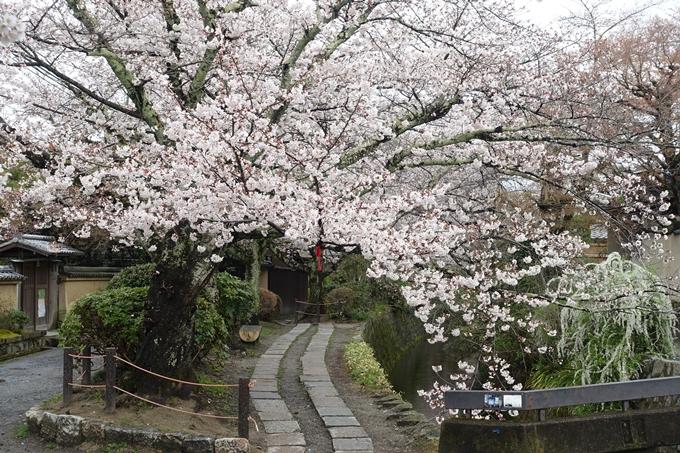 京都_桜_2020_12 哲学の道 No21
