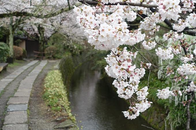 京都_桜_2020_12 哲学の道 No22