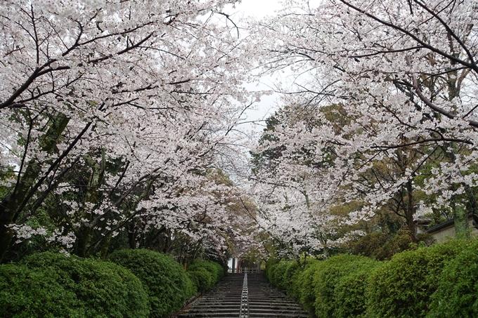 京都_桜_2020_21 宗忠神社 No5