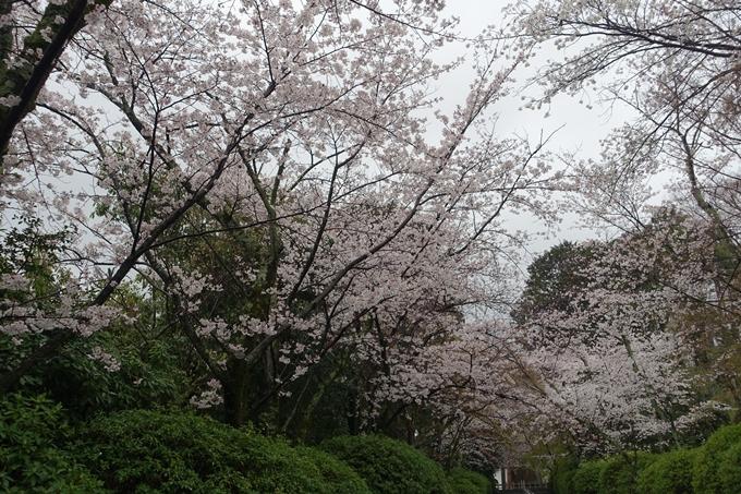 京都_桜_2020_21 宗忠神社 No6