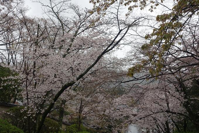 京都_桜_2020_21 宗忠神社 No8