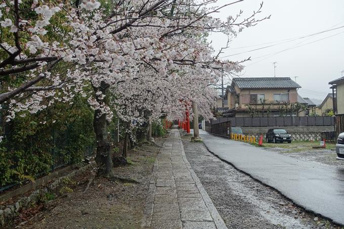 京都_桜_2020_21 宗忠神社 No12