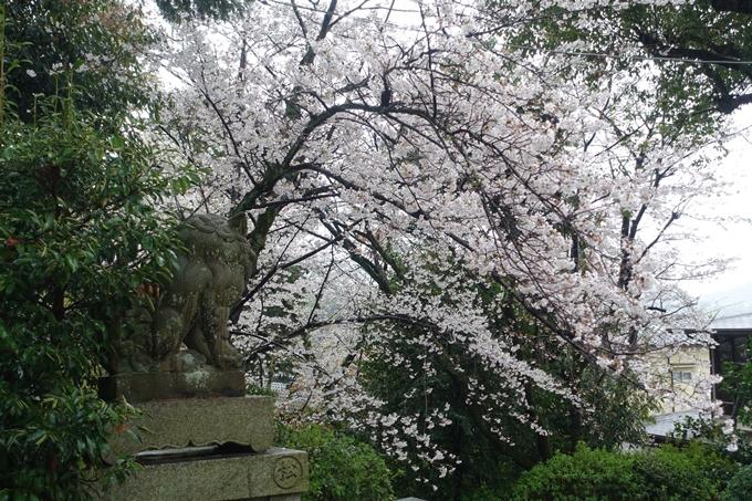 京都_桜_2020_21 宗忠神社 No15