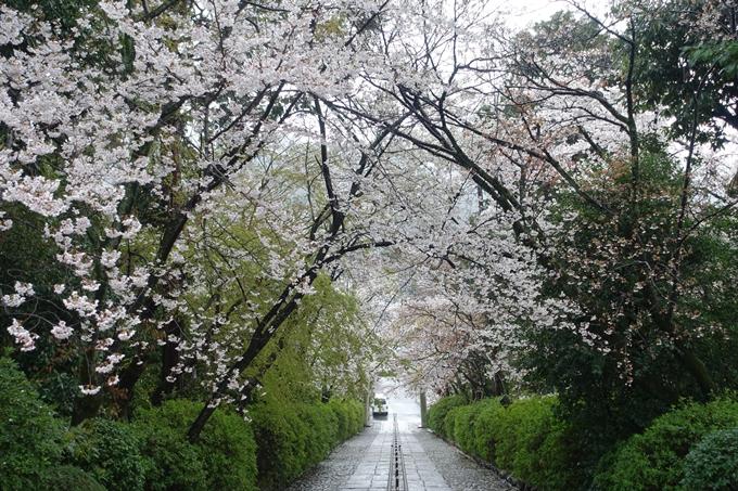 京都_桜_2020_21 宗忠神社 No16