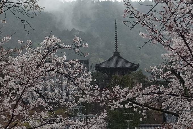 京都_桜_2020_21 宗忠神社 No22