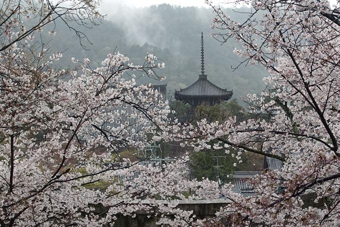 京都_桜_2020_21 宗忠神社 No23