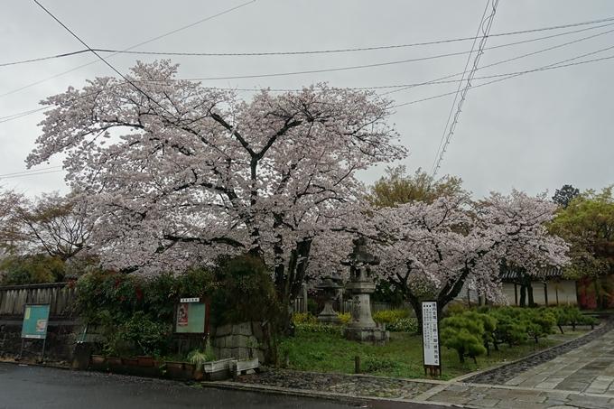 京都_桜_2020_22 真如堂 No2