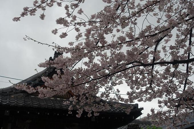 京都_桜_2020_23 吒枳尼天 No4