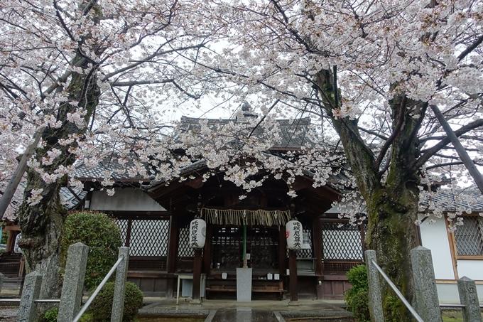 京都_桜_2020_23 吒枳尼天 No6