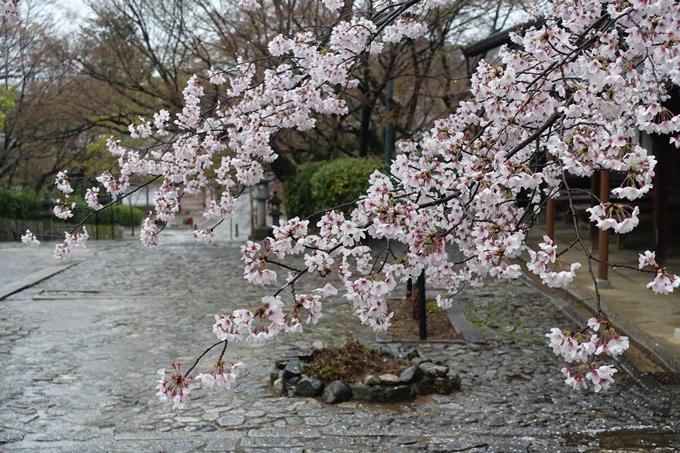 京都_桜_2020_22 真如堂 No6
