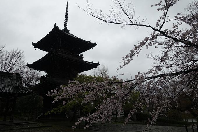京都_桜_2020_22 真如堂 No7