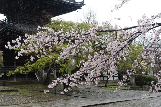京都_桜_2020_22 真如堂 No8